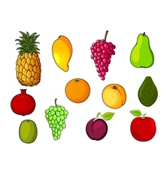 Fresh tropical and garden fruits vector