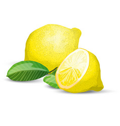 lemon fresh composition vector image vector image