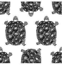 Seamless pattern with hand drawn turtles vector