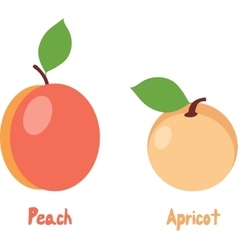 Peach and apricot vector