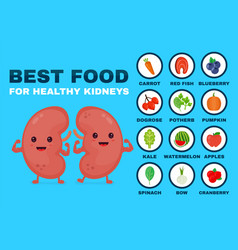 best food for strong kidneys strong healthy vector image vector image