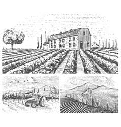 Vineyards landscape tuscany fields old looking vector