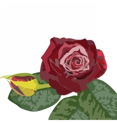Watercolor dark red rose bouquet vector