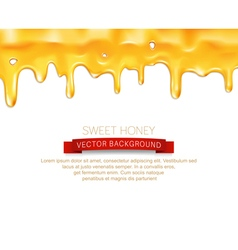 Drips honey isolated on white background vector