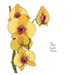 Flower of yellow orchid vector