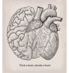 heart with half brain of human together hand vector image vector image