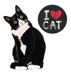 i love cat vector image vector image