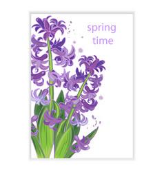 spring flowers purple hyacinths vector image vector image