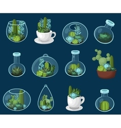 Colorful cactus and succulent set vector