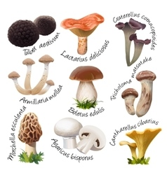 Collection of various species edible mushrooms vector