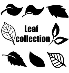 High quality original leaf collection isolated on vector image vector image