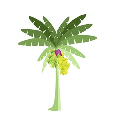 Banana tree with bananas and blossom vector