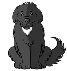 big fluffy dog vector image vector image