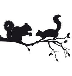 Squirrels on tree branch vector image vector image