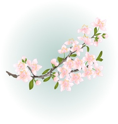 Branch cherry pink flowers with leaves vector