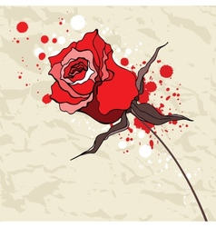 Grunge red rose on crumpled paper background vector
