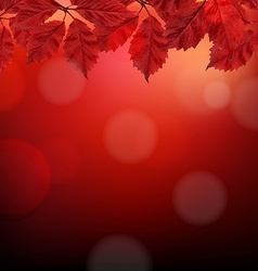 Red autumn background with leaves vector