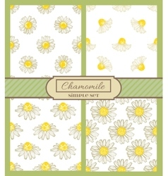 Chamomile background simple set vector