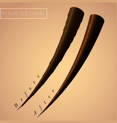 Restore split ends hair result salon procedure vector