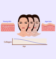 Face and two types of skin - aged and young vector