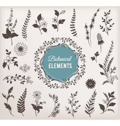 Set of Botanical Elements vector image vector image