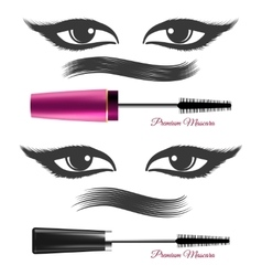 Demonstration mascara effects vector image