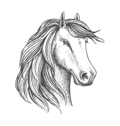 Arabian mare horse head isolated sketch vector