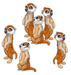Funny family of meerkats animals isolated vector