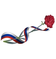 Red carnation flower and ribbon tricolor Russian vector image