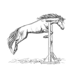 White horse jumping over barrier sketch portrait vector