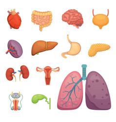 Cartoon human organs set anatomy of body vector