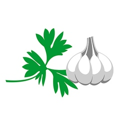 Grey garlic with green parsley isolated vector