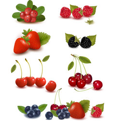 Big set of berries and cherries vector