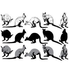 Set of kangaroo on a white background vector image vector image