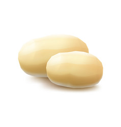 Two yellow raw whole peeled potatoes on background vector