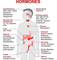 Hormones vector