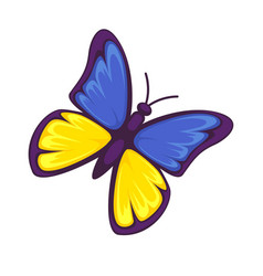 butterfly in yellow and blue colors isolated on vector image vector image