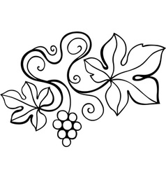 Vine design element vector image vector image