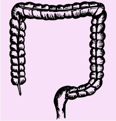 Large intestine colon vector