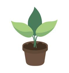 Pot plant garden concept vector