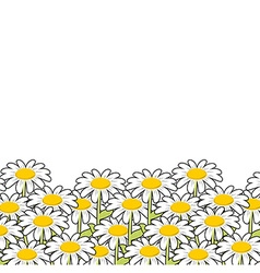 Chamomile white flowers summer meadow beautiful vector