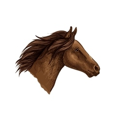 Brown horse head isolated sketch vector
