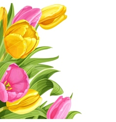 Background of pink and yellow tulips on white vector image