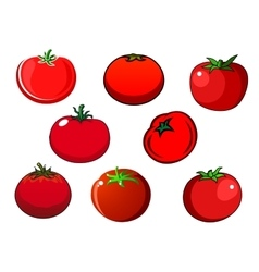 Fresh red isolated tomato vegetables vector