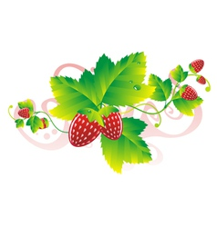 Strawberry leaves vector