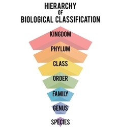 with major taxonomic ranks vector image vector image
