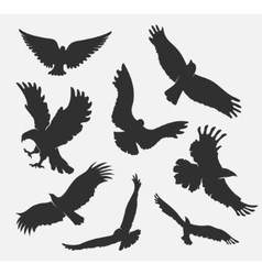Silhouette flying eagle on white background vector