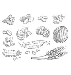 Nuts grain pencil sketch icons on blackboard vector