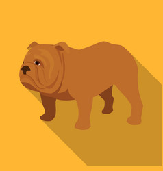 English bulldog icon in flat style isolated on vector