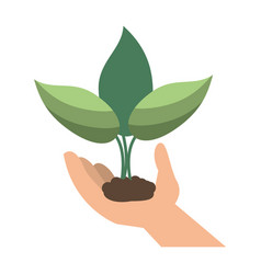 Hand holding plant leaves vector